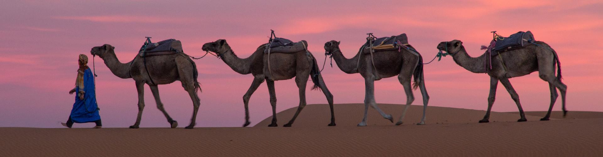 Dating annuncio agenzia con cammello