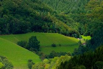 Panoramica Foresta Nera, Germania - Europa